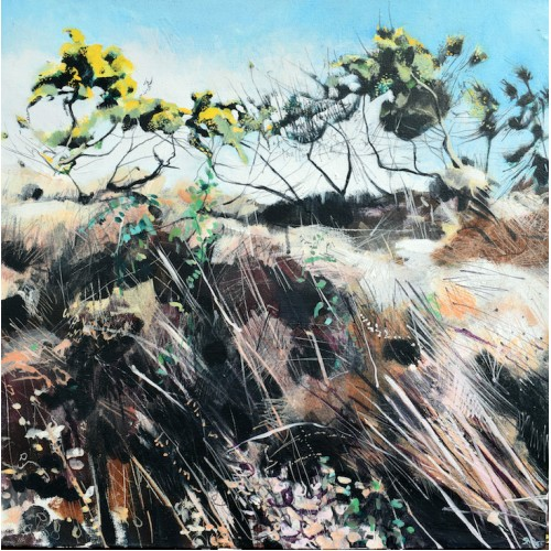 Gorse up on the Bank, acrylic on canvas, 56 x 56cm
